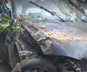 Жінку розірвало – частини розлетілися по дорозі та лісосмузі: на трасі сталася жахлива аварія