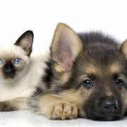 """Коти, собаки і навіть хом'яки: """"слуги народу """" ініціюють введення корупційного """"податку"""" на домашніх тварин"""