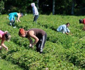 У Німеччині почали боротьбу з українськими заробітчанами: що там відбувається