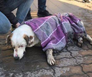 У Франківську продовжуються випадки отруєння собак (відео)