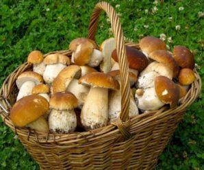 На Прикарпатті п'ятеро людей отруїлися грибами