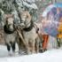 """""""Бабине літо"""" в грудні: синоптики розповіли, якою буде погода взимку в Україні"""
