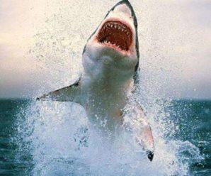 У Єгипті на українських туристів напала акула, 12-річний хлопчик залишився без руки