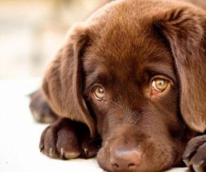 У Франківську розшукують зловмисників, які отруюють собак