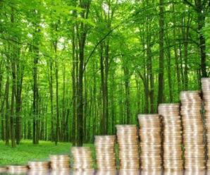 Лісові господарства Прикарпаття сплатили понад 200 мільйонів податків