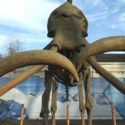 У Франківську відкрили виставку тварин льодовикового періоду (ФОТО/ВІДЕО)