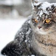 Коли в Україну прийдуть сніг та морози: прогноз синоптиків