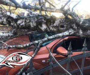 На Франківщині вітер повалив на автомобіль дерево (ФОТО)