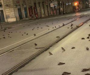 Відео шокує! Сотні птахів загинули внаслідок новорічних феєрверків