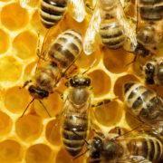 На Прикарпатті створять комісію, яка розслідуватиме отруєння бджіл