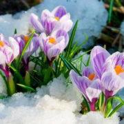 На Прикарпаття повернеться мокрий сніг і похолодання