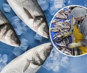 Риба здатна викликати нервові розлади: медики б'ють на сполох