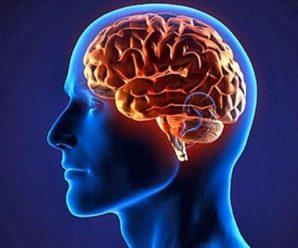 Вчені з'ясували, як коронавірус впливає на мозок людей