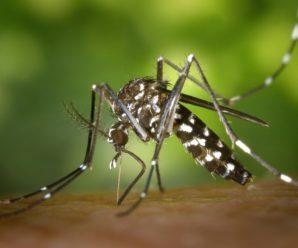 Як зменшити свербіж після укусу комара: топ-5 способів