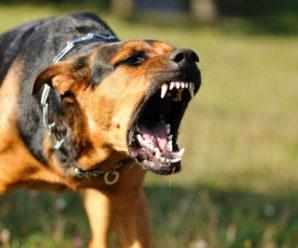 У Франківську агресивний собака покусав дитину та патрульного (ВІДЕО)