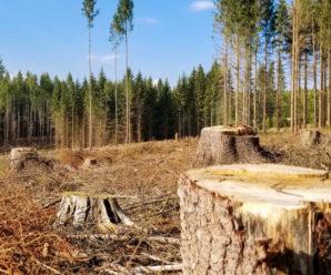Прикарпатець заплатить 51 тисячу штрафу за п'ять зрубаних дерев