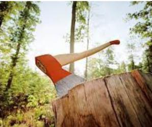 Прикарпатця зобов'язали заплатити 280 тисяч за зрубані дерева