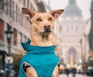 Собака з України проїхала 30 країн і 116 міст: мила історія врятованого цуценяти (ВІДЕО)