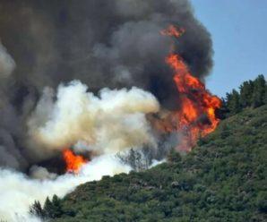 У Туреччині поблизу популярного курорту спалахнула лісова пожежа, є жертви. Відео