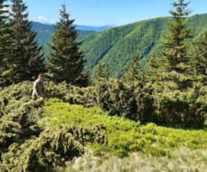 Прочісують ліс та гірські схили: на Закарпатті вже п'яту добу шукають 29-річного чоловіка