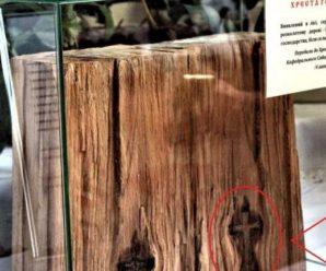 Диво-знахідка: на Закарпатті в лісі знайшли нерукотворне зображення Хреста