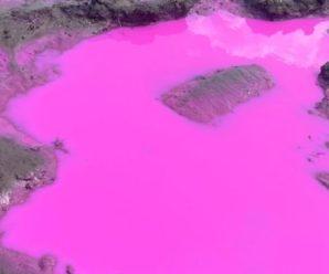 Утворилися яскраво-рожеві калюжі: на поле вилили невідому рідину (фото)