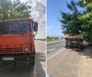 На Закарпатті з вантажівки на дорогу висипалися дохлі кури: фото вражають