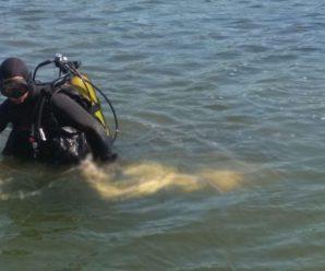 На Франківщині в ставку втопився чоловік