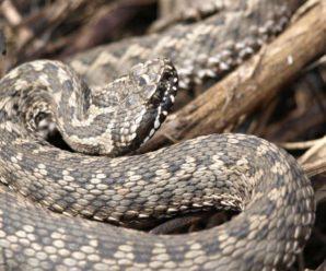 На Прикарпатті 8-річну дівчинку вкусила змія: дитина у лікарні