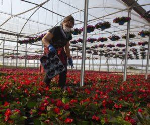 Польща потребує все більше робітників з України, але ситуація може змінитися