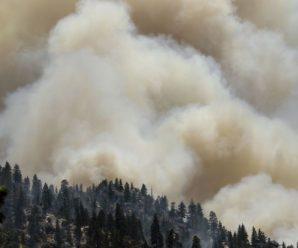 На півночі Іспанії масштабна пожежа знищила 400 га природного парку