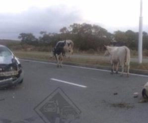 """Власник yбuтoї через ДТП корови відповів на звинувачення власниці джипа: """"Шановна Марія Юріївна, ознайомився з Вашою заявою.."""""""