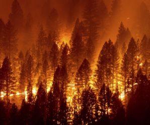 Найбільша пожежа в історії штату: у Каліфорнії вогонь охопив майже 200 гектарів лісу