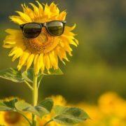 В Україні у другій половині серпня буде «африканська спека». Прогноз синоптикині
