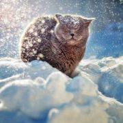 Уже через 20 років в Україні може не бути зими