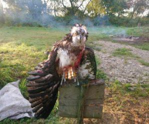На Прикарпатті вбили рідкісного птаха. Фото