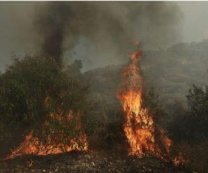 В Іспанії вирують потужні лісові пожежі: слідчі підозрюють підпал