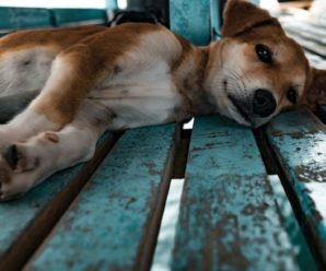 Мордувала голодом 70 тварин і заробляла гроші: жінка перетворила квартиру на в'язницю для собак і котів