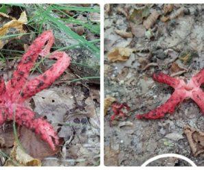 """""""Пальці диявола"""": Поблизу Франківська ростуть рідкісні гриби (фото)"""