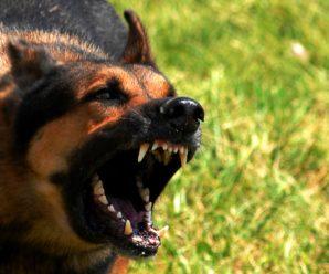 У Франківську собака покусав 10-річного хлопця: господар лишив малому 200 гривень і втік