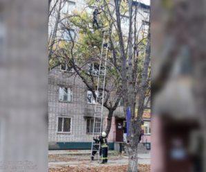 Рятувальники знімали з дерева вагітну жінку: вона не могла спуститись самостійно