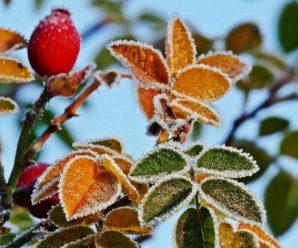 В Україні очікуються заморозки: погода на 3 жовтня