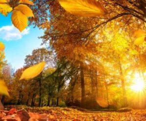 Синоптики обіцяють теплий і сонячний вікенд 9-10 жовтня