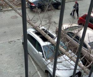 Піщана буря, повалені дерева та будинок, який обвалився: у Львові лютував буревій (відео)
